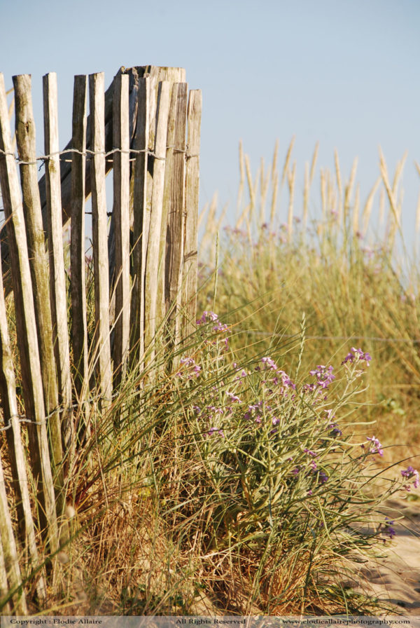 DUNES FLOWERS Elodie Allaire Photography