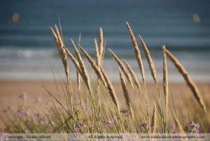 DUNES Elodie Allaire Photography