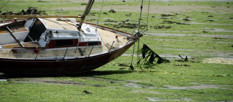 Barques en pagaille