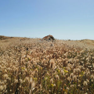 Fleurs sur les dunes