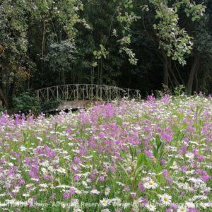 Pont fleuri